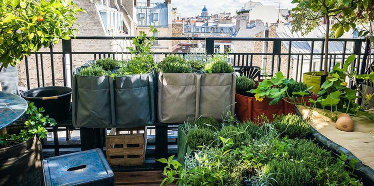 chers amis des plantes chatpotier. Black Bedroom Furniture Sets. Home Design Ideas